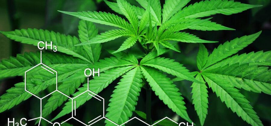 Растительные наркотики: в чём их опасность?